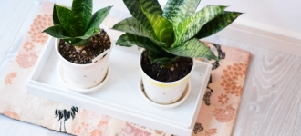 Houseplants Health Benefits